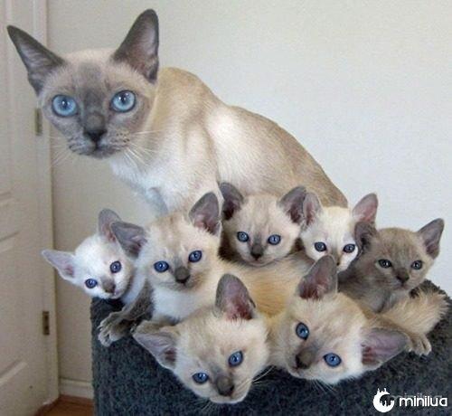 proud-cat-mommies-231__605
