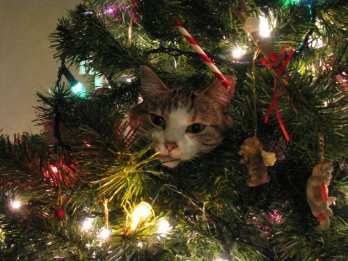 cat-in-christmas-tree-1354919955_org