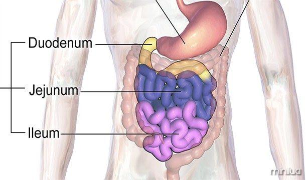 Os oligossacáridos (açúcares) no leite materno não são destinados para a criança, mas para as bactérias intestinais