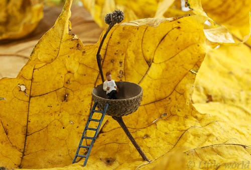 little-world-the-big-fun-of-photography-with-small-things-13__880