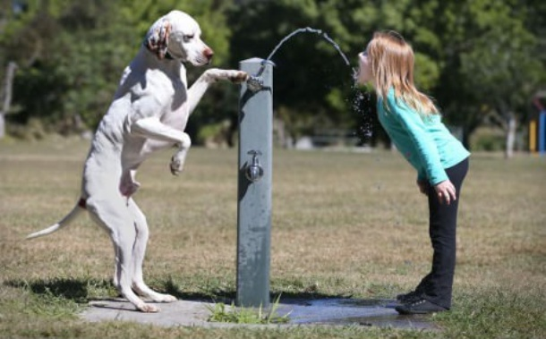 www.gagbay.com-smart_dog_giving_master_girl_a_drink_from_a_water_fountain-151590
