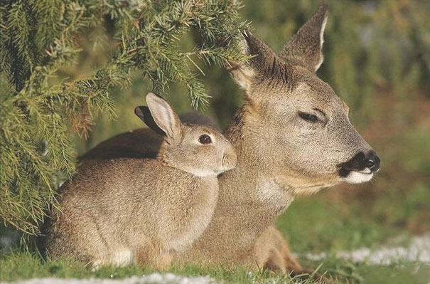 brother-from-another-mother-similar-animals-03-5788d495bd959__605