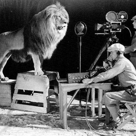 a98857_mgm_lion