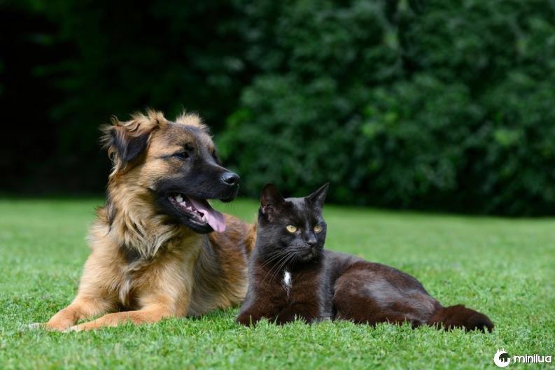 gato e cão 3