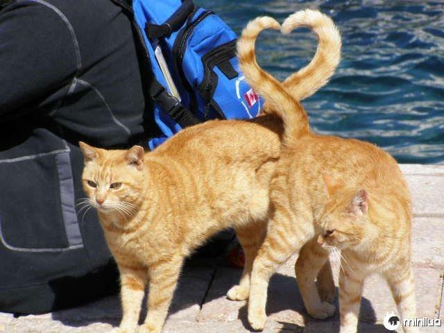 Gatos-coração-forma-com-cauda-perfeito-tempo