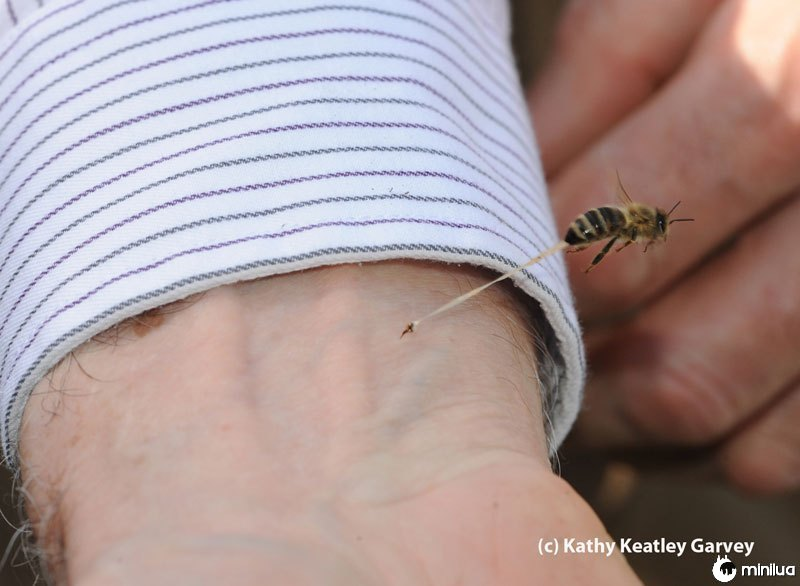 As-abelhas-final-picada