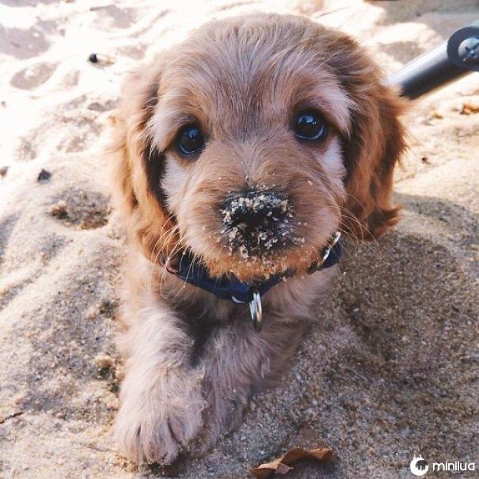 Primeira vez de Cooper na praia