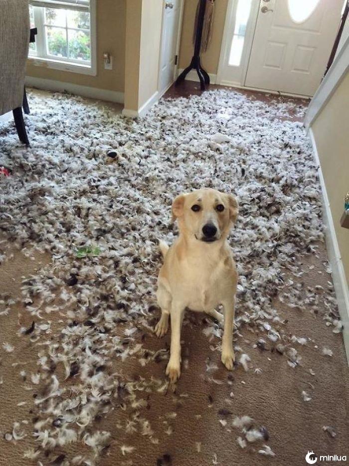 """""""Começ um cão"""" disseram, """"ele será divertimento"""" disseram"""