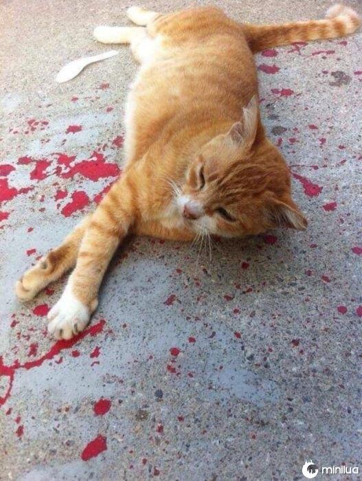 gato deitado em tinta vermelha