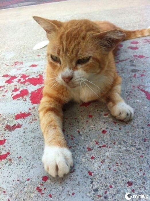 gato em gotas vermelhas