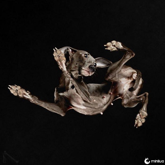 cão preto visto abaixo