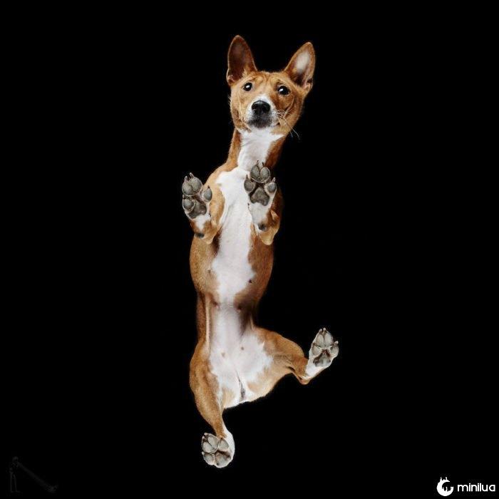 cão castanho com branco visto abaixo
