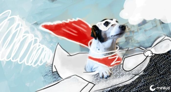 When Dogs Fly!
