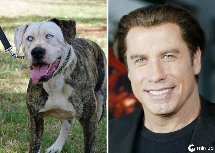 Um cão parece John Travolta