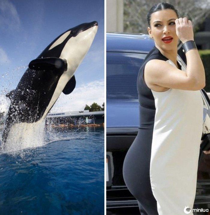 A baleia de assassino olha como Kim Kardashian