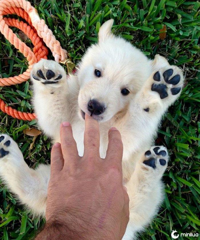 Não sure se meu amigo começ um filhote de cachorro ou um urso polar do bebê