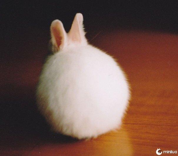 Bastão redondo do coelho