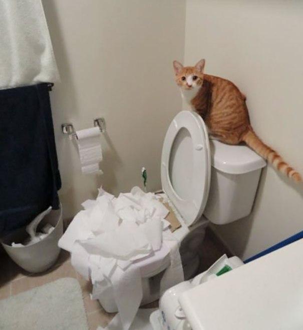 Eu fui treinamento do toalete o gato. Eu acho que ele está aprendendo muito bem