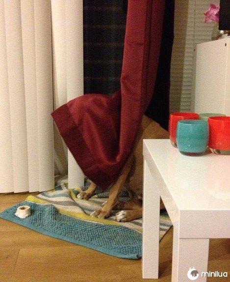 Grande cão escondendo em tons