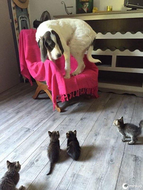 Encontrando pequenos gatinhos pela primeira vez