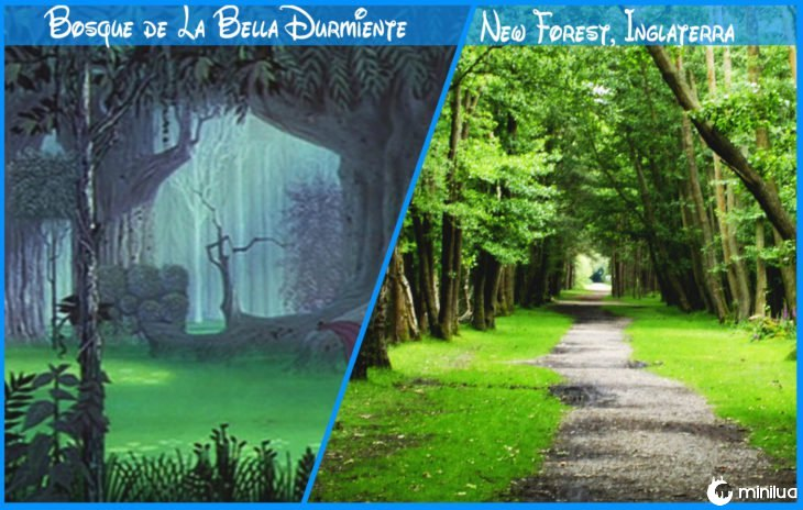 Floresta bonita dormir real e Disney