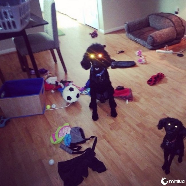 cachorros-aprontando-8