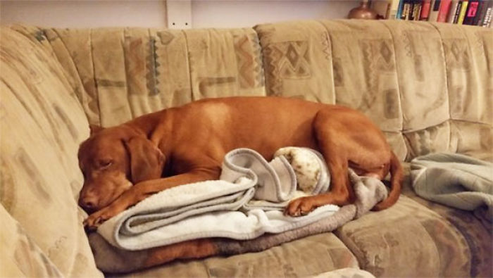 não deixe-se no sofá, mas esse cobertor não é o sofá ...