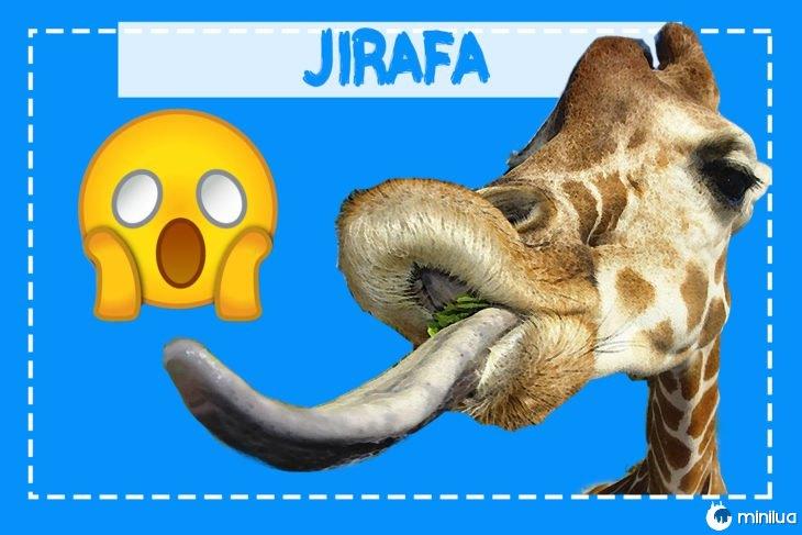 Girafa saindo a sua língua