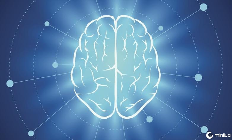 Curiosidades sobre el cerebro humano 2