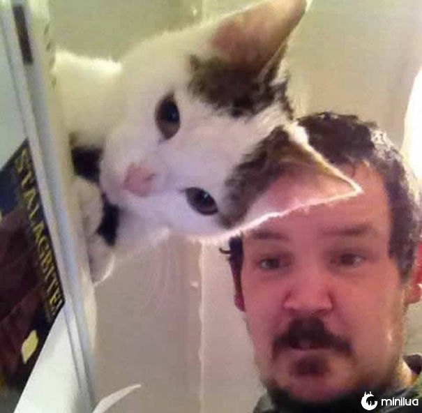 funny-perfectly-timed-cat-photo-2__605