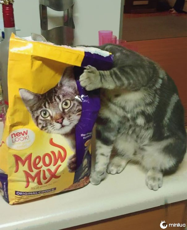 funny-perfectly-timed-cat-photo-32__605