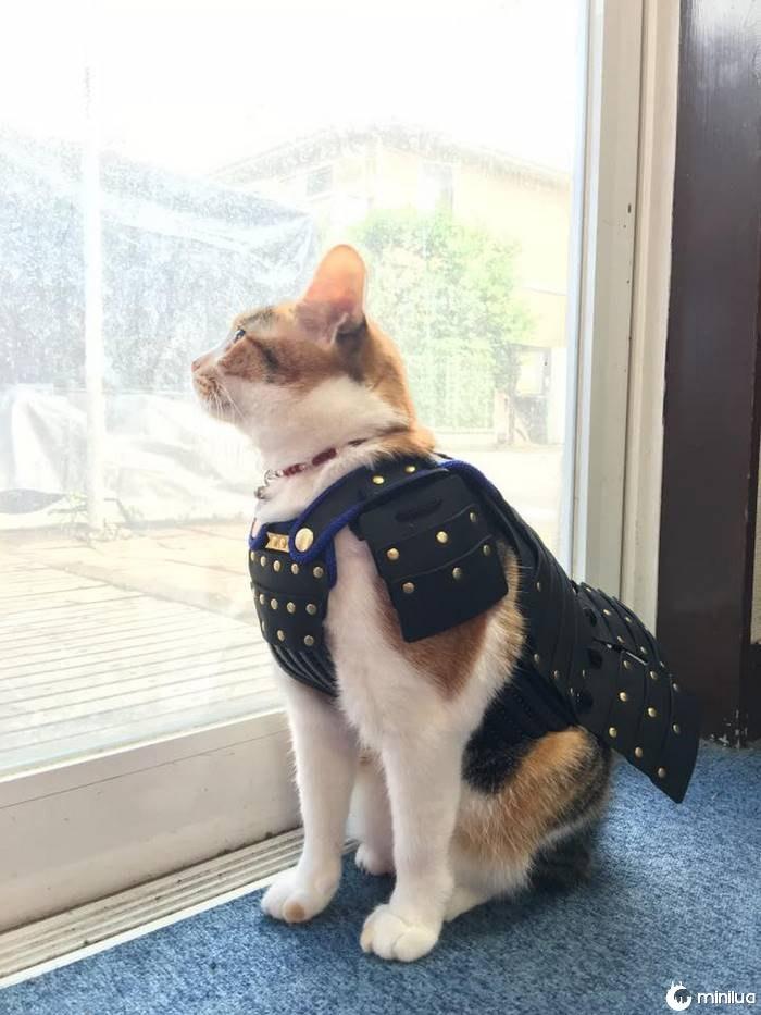 Pet-dog-cat-armor-samurai-age-japan-3