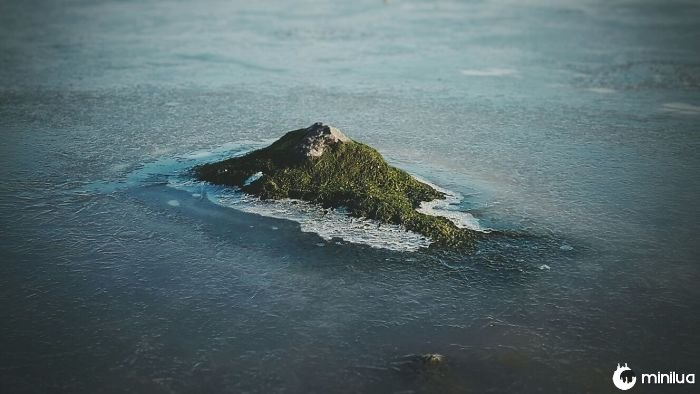 This Mossy Rock Looks Like A Tropical Island