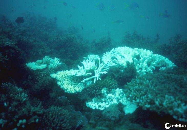 Arrecife en Australia