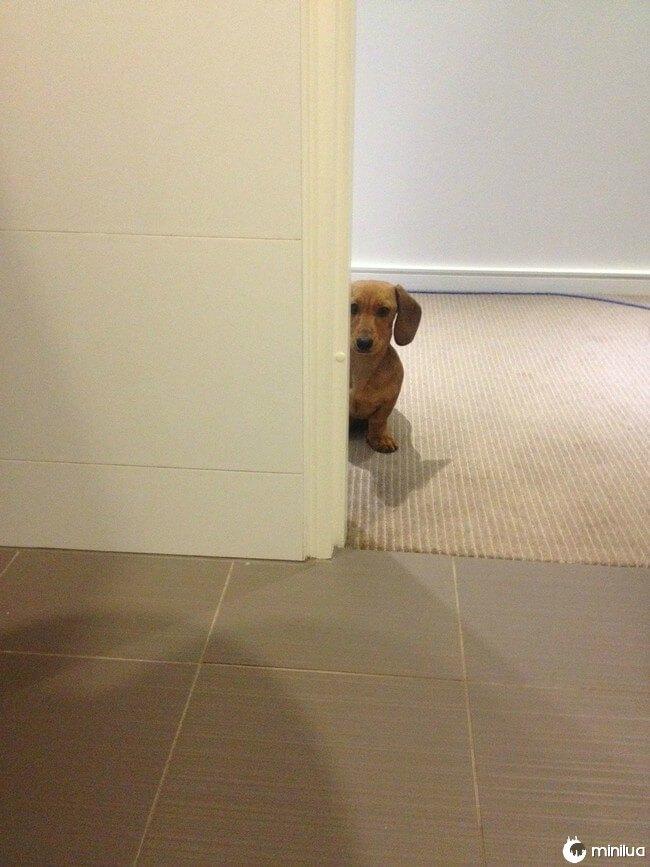 cachorro_banheiro11