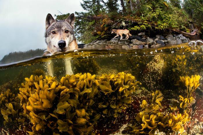 Natação-mar-lobos-pacific-coast-canada-ian-mcallister-3