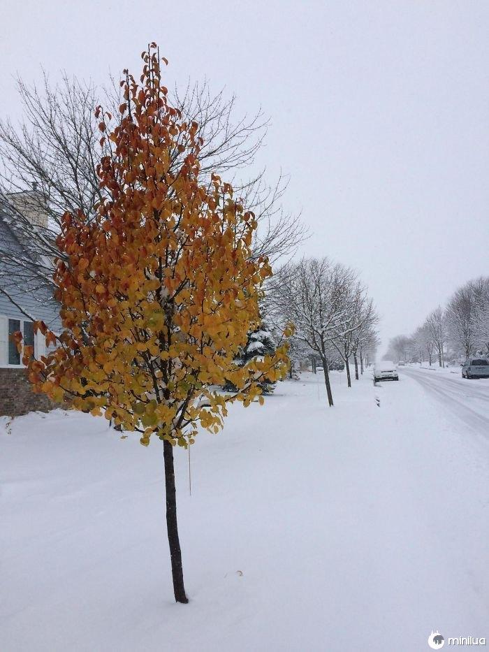 Uma árvore na minha rua recusou-se a aceitar o inverno