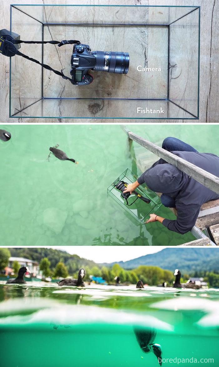 Use um Fishtank para obter esse tiro subaquático