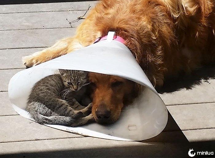 É bom ter um amigo quando você está para baixo e para fora