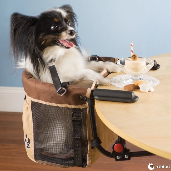 Produtos do cão - mesa de assento para cães