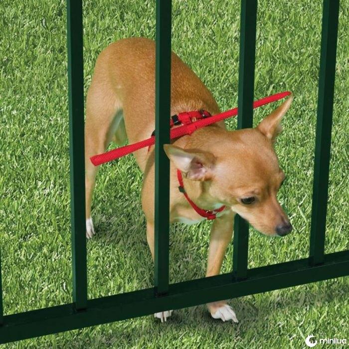 produtos do cão - colar para evitar que o cão para fora