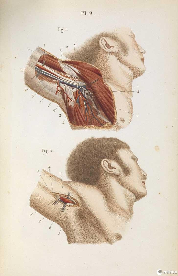 século barbara cirurgia 19 13