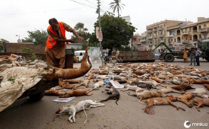 no Paquistão matam 700 cães 1