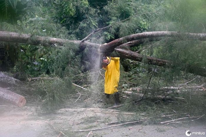 Um empregado de uma empresa elétrica trabalha para remover uma árvore derrubada pelo furacão Irma, em Sanchez, República Dominicana, na quinta-feira