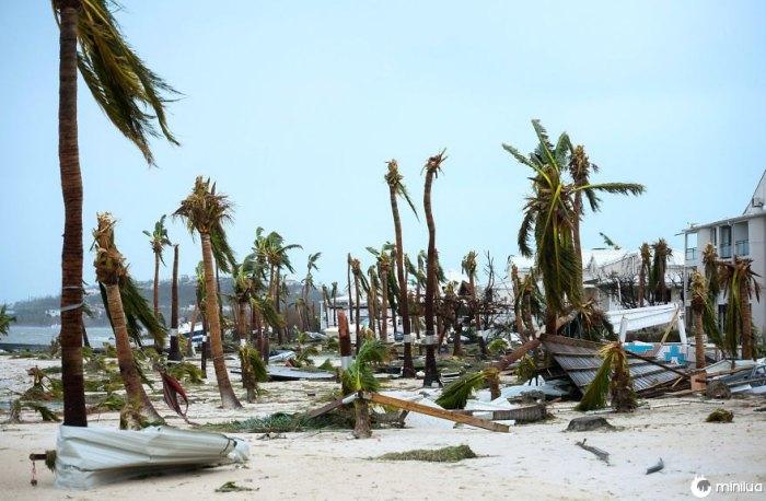 Palmeiras quebradas na praia do hotel Mercure In Marigot, São Martinho