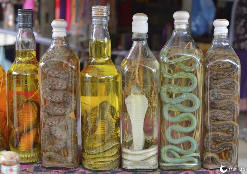 Bebidas estranhas do Vietnã o vinho de cobra 2 0