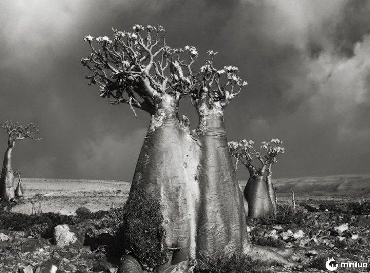 tronco de árvore grosso