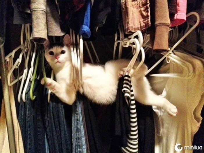ganchos de gato
