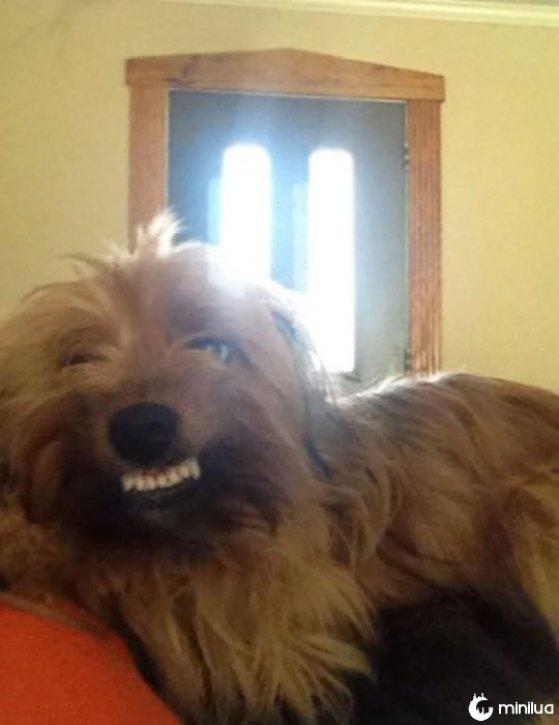 smileperro