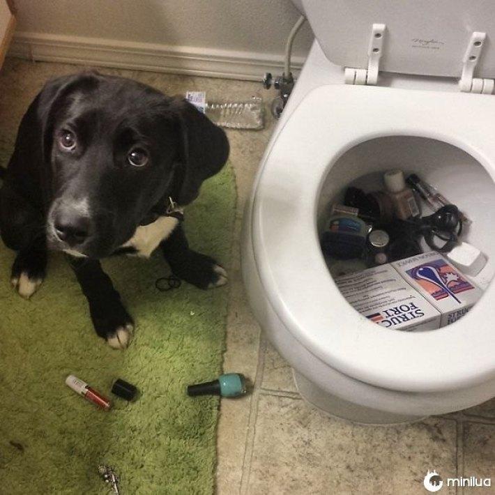 cão desculpado